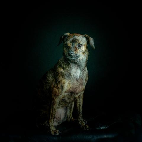 Dog Photography Anyone?