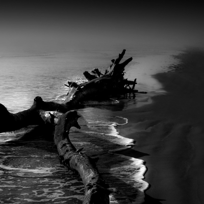 Driftwood, Gulf Coast, North Padre Island
