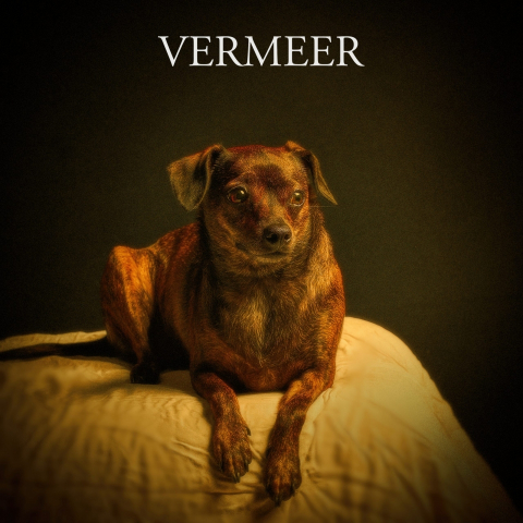 VEMEER scaled
